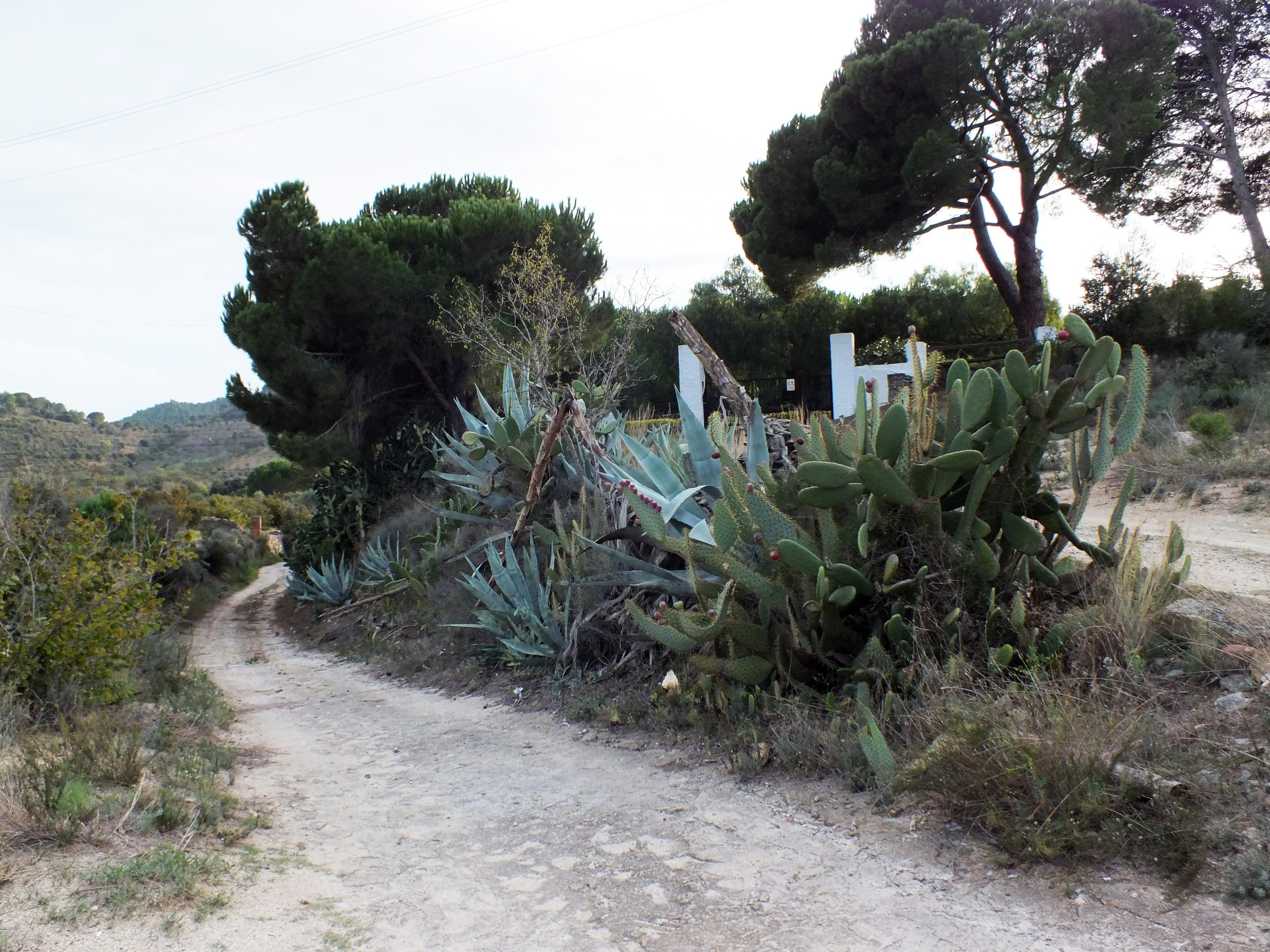 Alberi Ad Alto Fusto Quali Sono the passion for cacti and other succulents