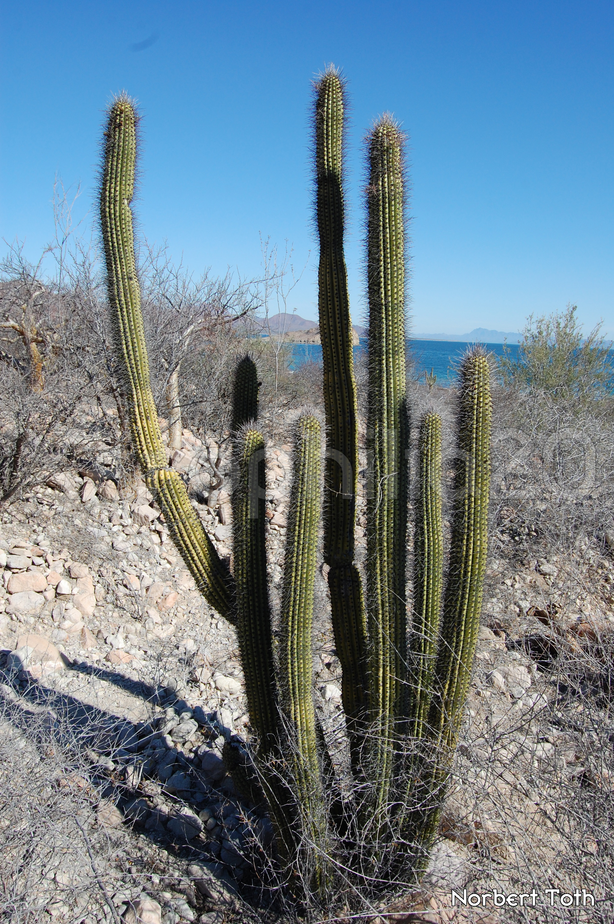 The Passion For Cacti And Other Succulents